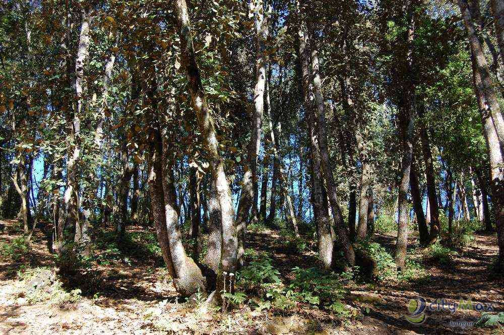 Citymax vende terreno tipo granja Santiago Sacatepequez