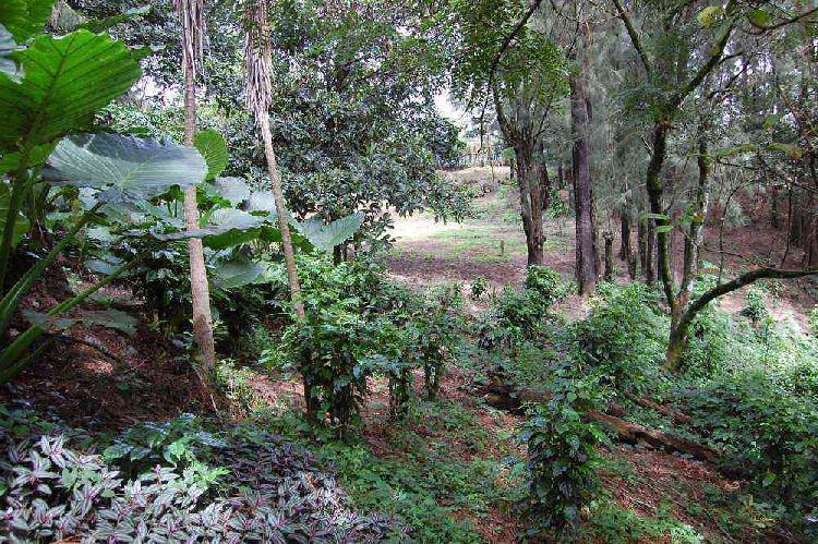 Terreno en venta en Carretera a El Salvador Guatemala