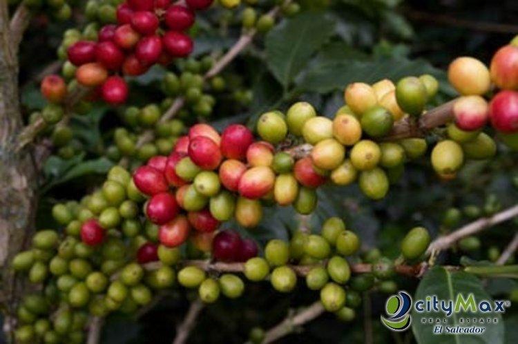 Finca de 143.5 Manzanas en volcan Chinchontepec La Paz